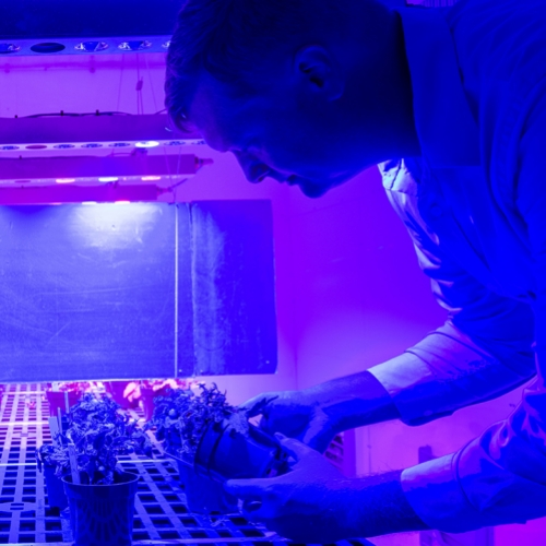 Growing the World's Food in Greenhouses