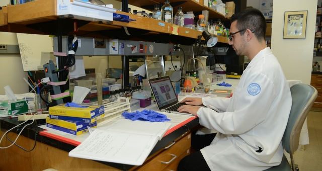 A graduate student works on a research poster and presentation in the Gudas Lab.