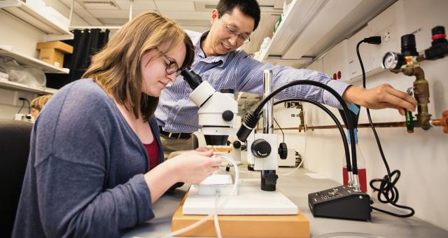 Chun Han uses CRISPR to modify fly genes that could play a role in neurodevelopment.