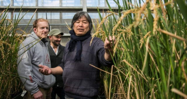 McCouch's research team is developing tools that let plant breeders examine the genetic profiles of their breeding lines.