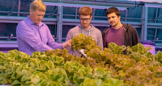 Growing the World's Food in Greenhouses | Cornell Research