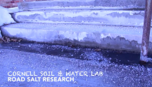 Road Salt Research